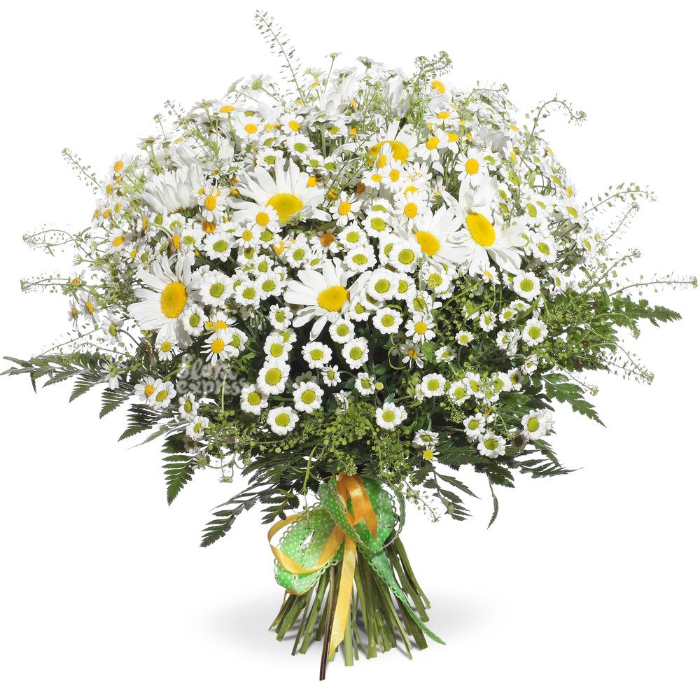 Букет «Flora Express» Счастливые ромашки фото